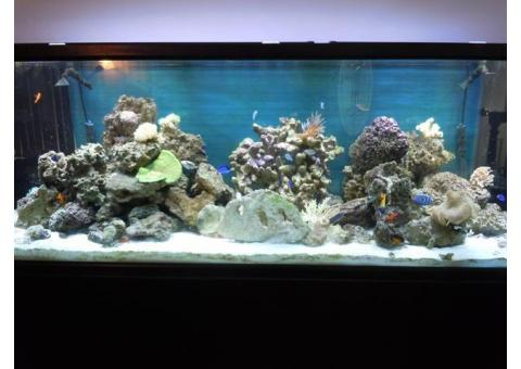 265 Gallon Fish Tank